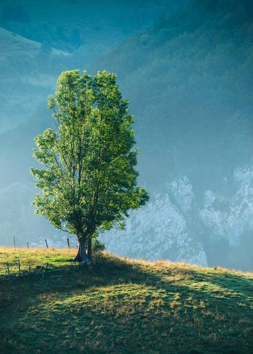 Foto d'estoc gratuïta de alba, arbre, estiu, herba