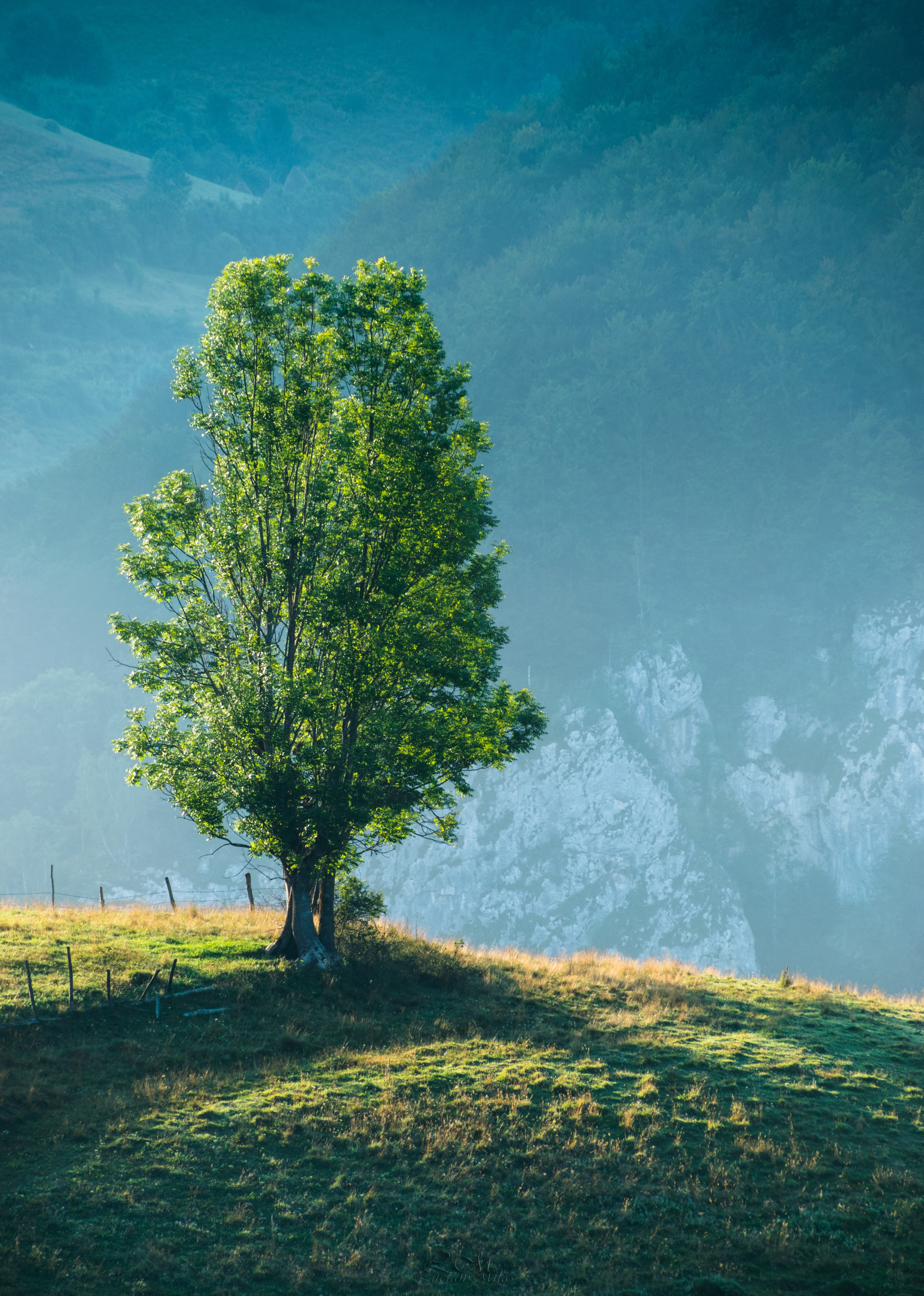 Brown And Green Tree On Grass 183 Free Stock Photo