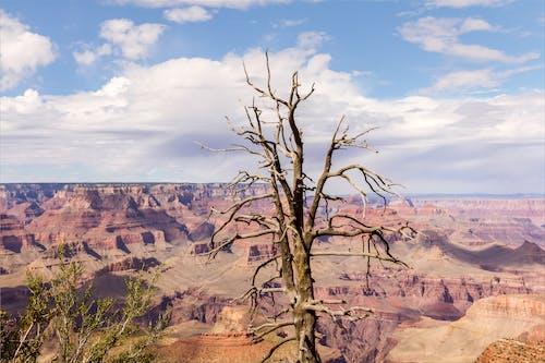 Imagine de stoc gratuită din arbore, cer, copac