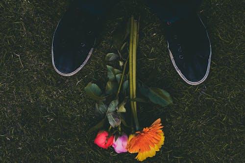 Δωρεάν στοκ φωτογραφιών με γρασίδι, λουλούδια, όμορφα λουλούδια, υποδήματα