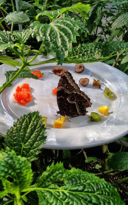 Imagine de stoc gratuită din culoare, delicios, farfurie, fluture
