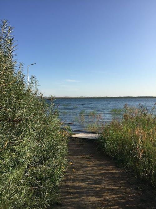 คลังภาพถ่ายฟรี ของ ท้องฟ้าสีคราม, ทะเล buckthorn, ทะเลสาป, ทางเดิน