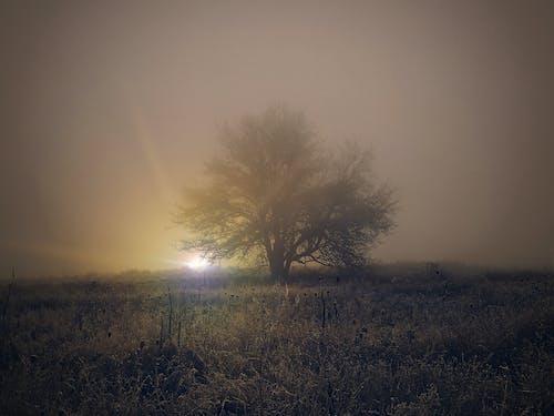 Gratis stockfoto met alleen, avondzon, boom, mooi landschap