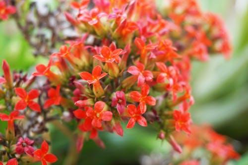 天性, 美在自然中, 花 的 免费素材照片