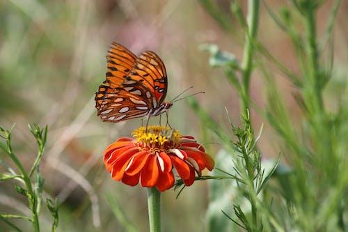Kostnadsfri bild av apelsinblomma, blomma, delikat, fjäril