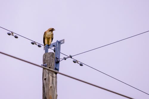 Bird Perched on Electricity Pole