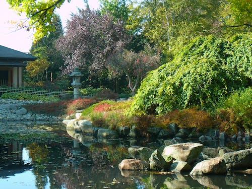 Free stock photo of japooński ogród, wrocław
