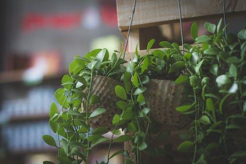 Gratis lagerfoto af årgang, grøn, kaffe