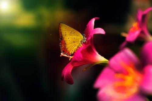 Бесплатное стоковое фото с бабочка, дневной свет, красота в природе, макросъемка