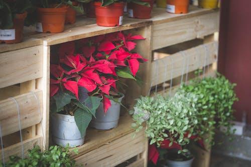 Gratis lagerfoto af grøn, rød, skrivebord