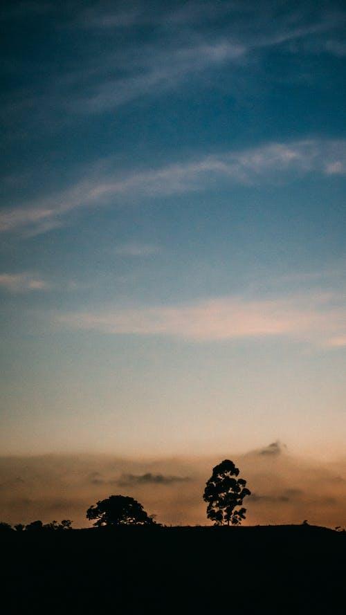 Silhouette of Tree Under Blue Sky