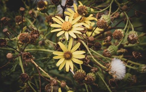 Ảnh lưu trữ miễn phí về cánh đồng hoa, chụp ảnh thiên nhiên, công viên tự nhiên, cuộc sống tự nhiên