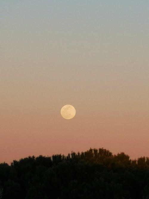 Бесплатное стоковое фото с вечер, деревья, живописное небо, живописный