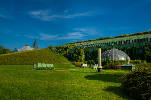 Kostenloses Stock Foto zu blaue himmel, dunkelgrüne pflanzen, grün, heller tagessonnenschein