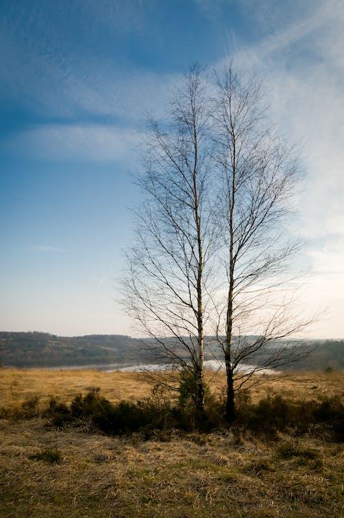 Fotobanka sbezplatnými fotkami na tému 2 stromy, berk, chladný, krajina