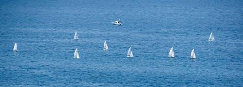 คลังภาพถ่ายฟรี ของ ซีลทะเล