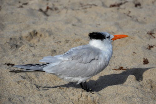 White Long-beak Bird Standing on Sand