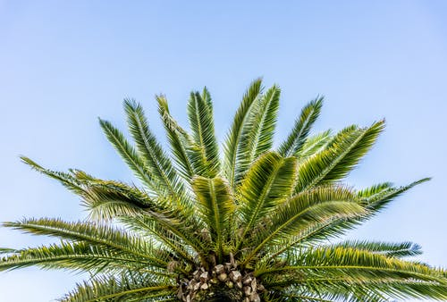 Free stock photo of palm