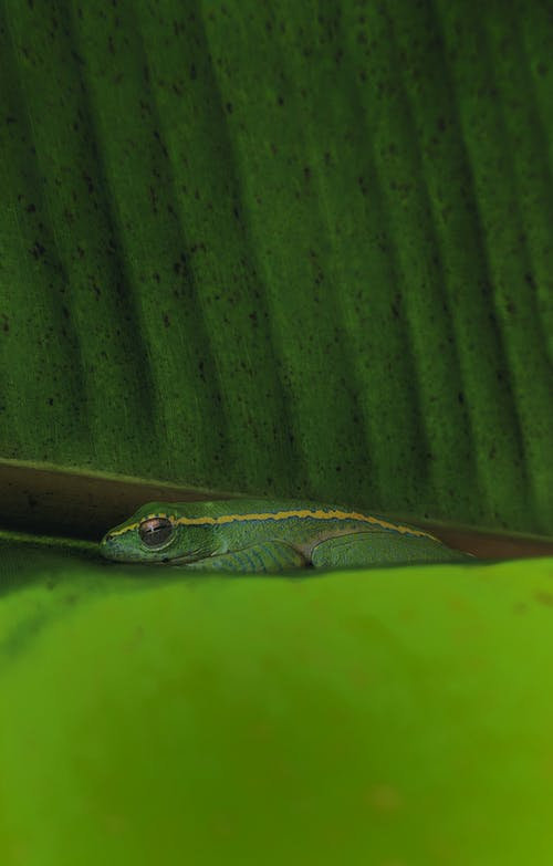Imagine de stoc gratuită din animal, exotic, fotografie de animale, frunză