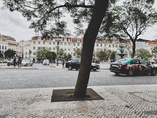ağaç, araba, kalabalık cadde, sokak içeren Ücretsiz stok fotoğraf