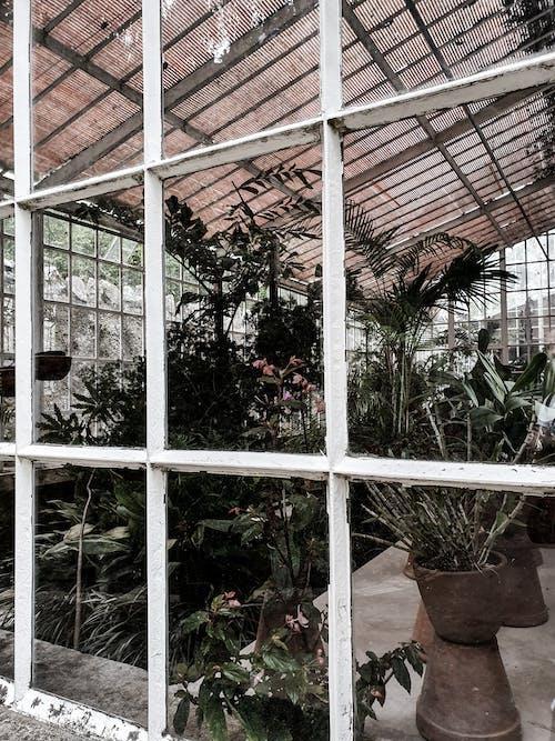 Δωρεάν στοκ φωτογραφιών με βοτανική, βοτανικός, βοτανικός κήπος, παράθυρο