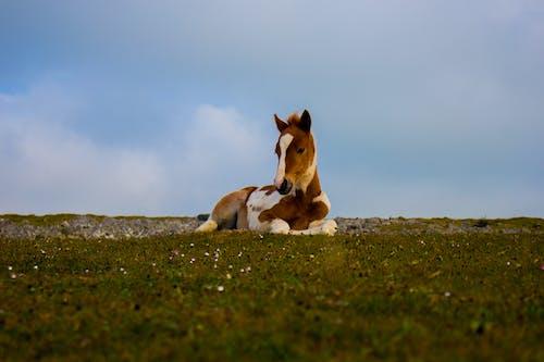 가축, 녹색, 누워 있는, 동물의 무료 스톡 사진