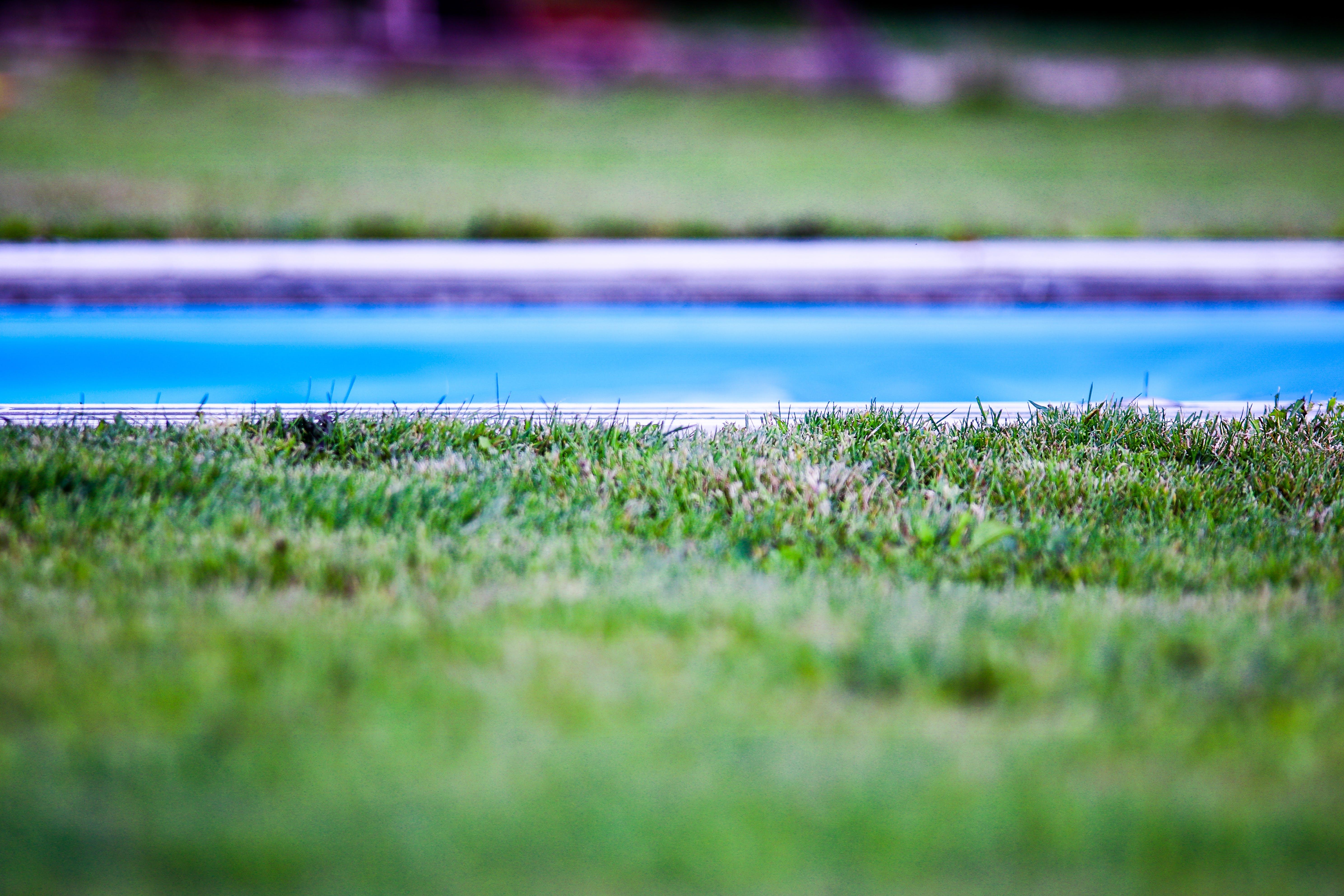 depth of field, garden, grass