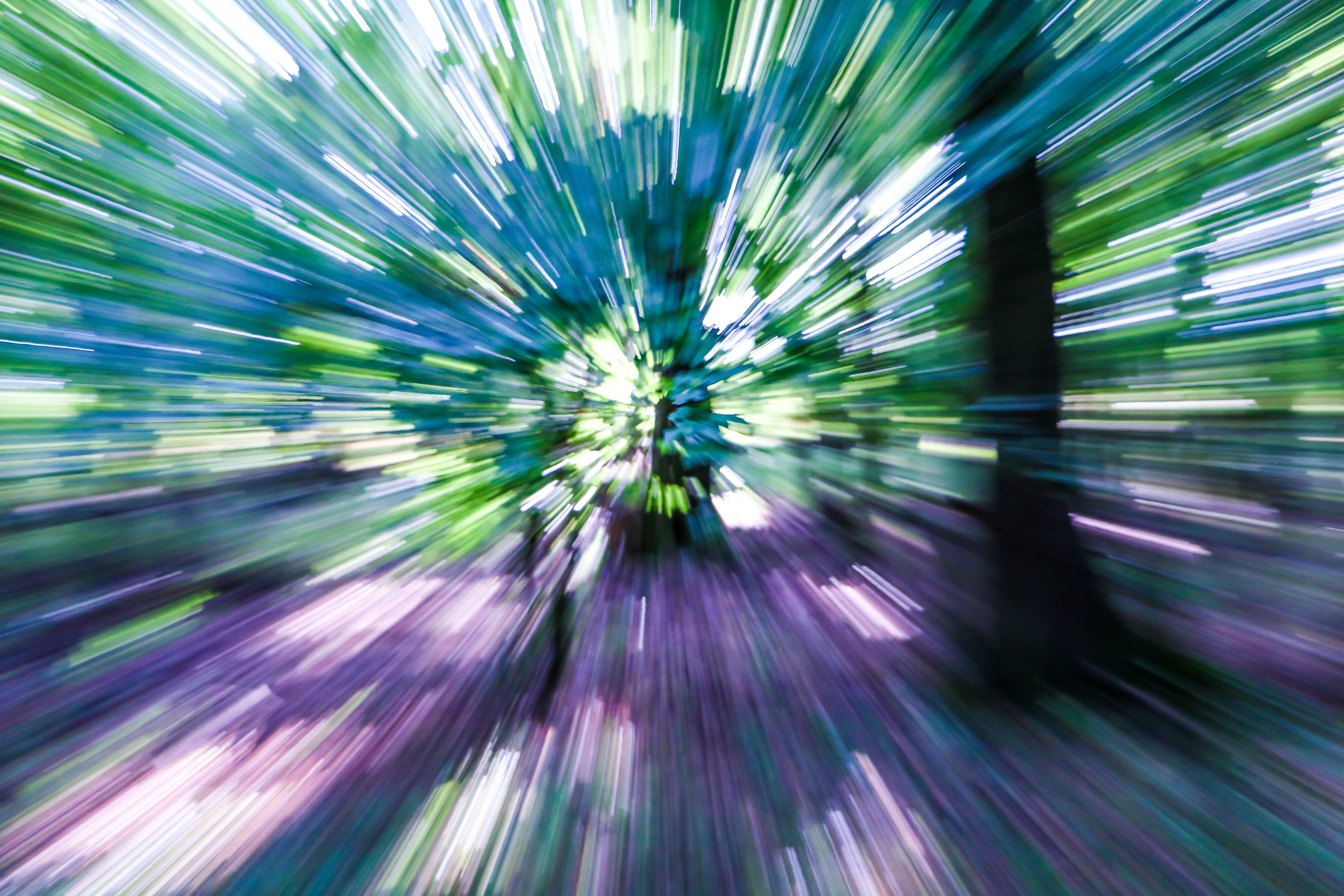 Free stock photo of abstract, forest, high speed, speed
