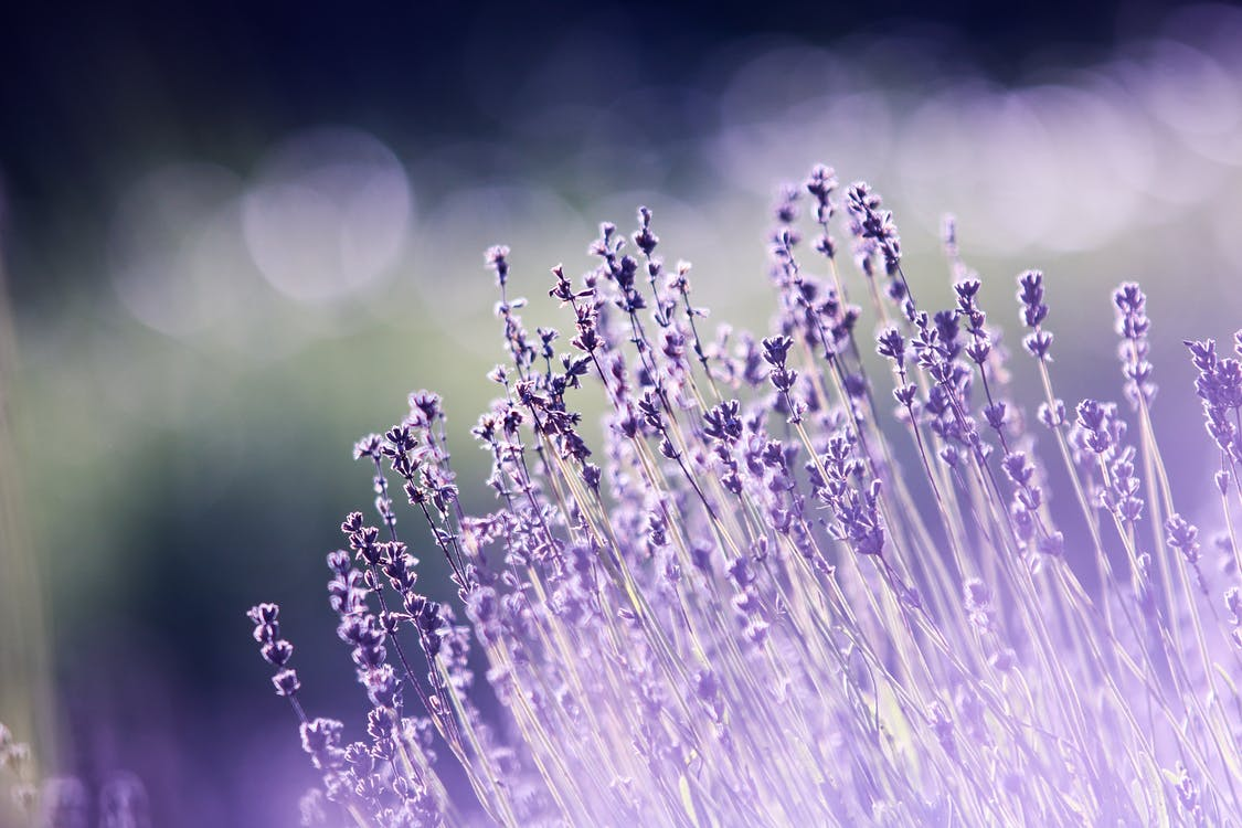 aromaterapie, barva, flóra