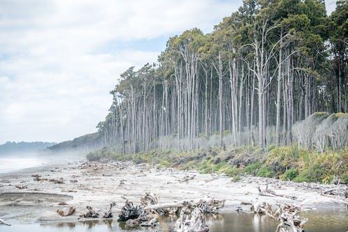 Безкоштовне стокове фото на тему «вода, Денне світло, дерева, Деревина»