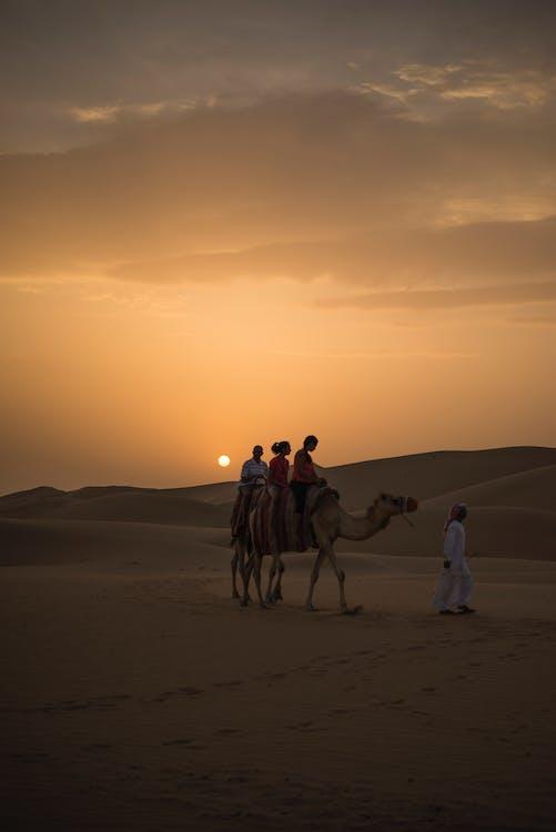 абу-дабі, арабський, верблюд