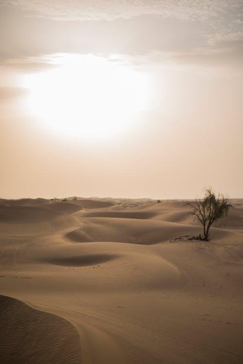 Fotobanka sbezplatnými fotkami na tému abu dhabi, Dubaj, duna, krajina