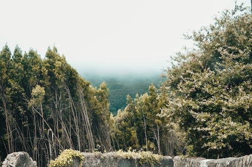 Kostnadsfri bild av dagsljus, dimma, dimmig, gräs