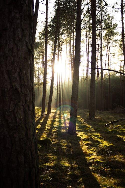 傍晚的太陽, 太陽, 太陽眩光, 日出 的 免費圖庫相片