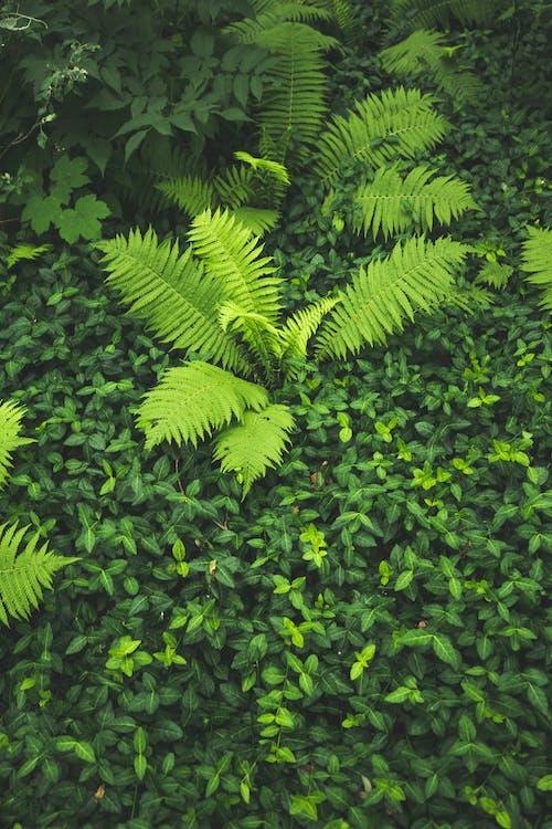 壁紙, 森林, 樹叢, 綠色 的 免費圖庫相片