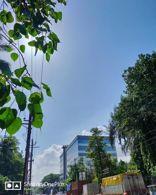Free stock photo of blu sky