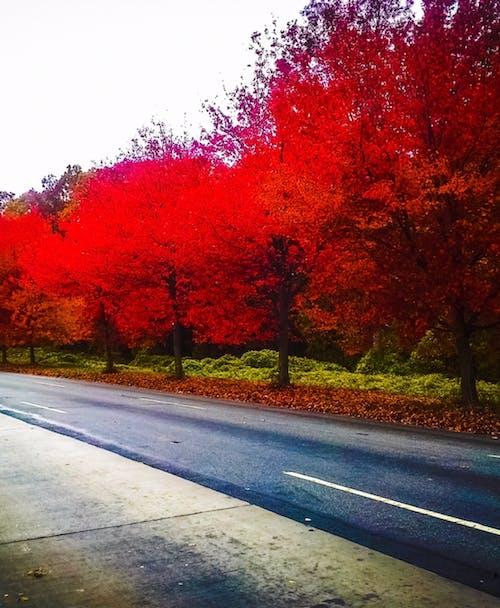 Gratis stockfoto met #statenisland #natuur #bomen #val #kleurrijk