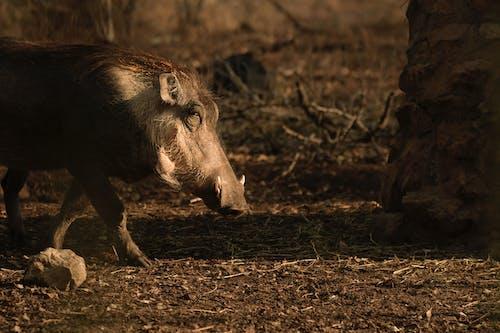 Photo of Wild Boar