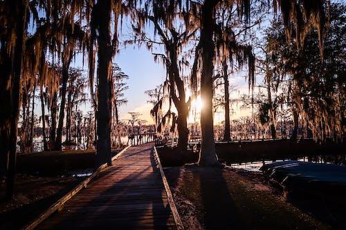 Free stock photo of boardwalk, georgia, sunset, trees