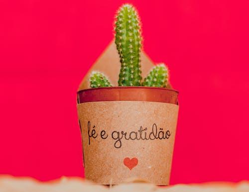 Immagine gratuita di cactus, deserto