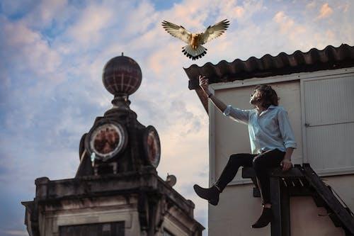 Ảnh lưu trữ miễn phí về ánh sáng ban ngày, các tòa nhà, cánh, chim