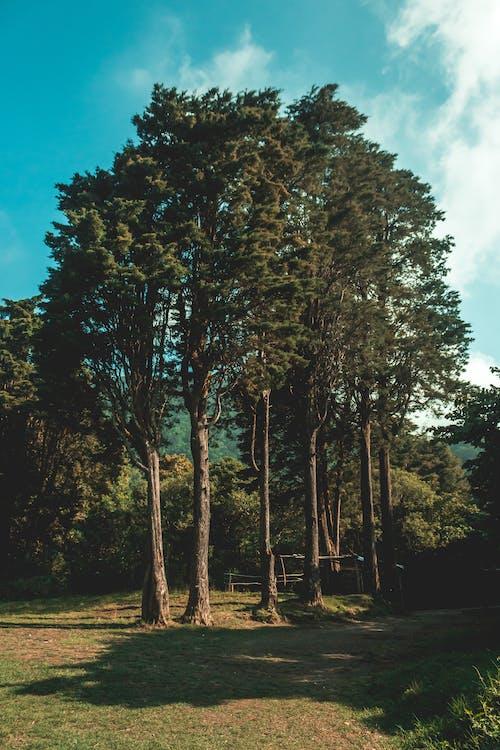 Gratis lagerfoto af blå himmel, Greenwood, HD-baggrund, HD-baggrunde