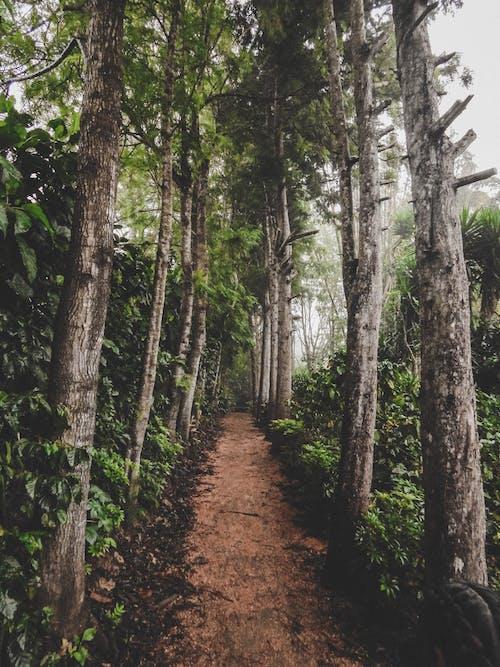 Foto d'estoc gratuïta de arbres, Camí, camí de carro, carretera