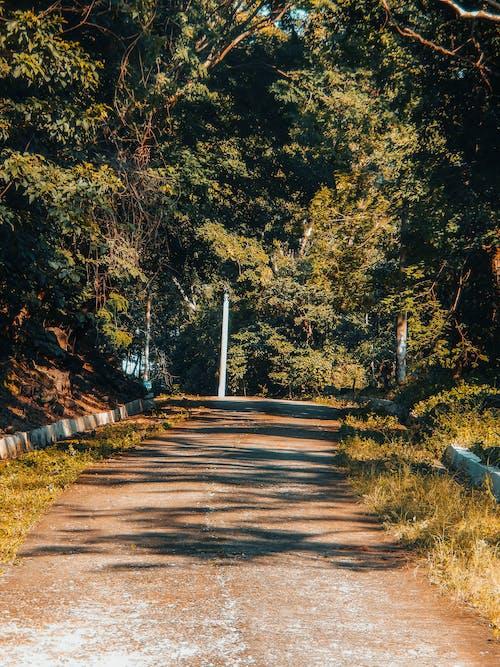 Gratis lagerfoto af efterår, gade, gul, skov