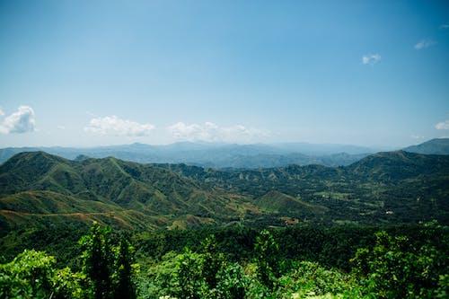 ağaçlar, çevre, doğa, doğa fotoğrafçılığı içeren Ücretsiz stok fotoğraf