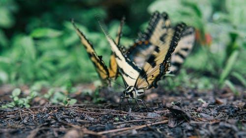Immagine gratuita di ali, animale, bellissimo, colore