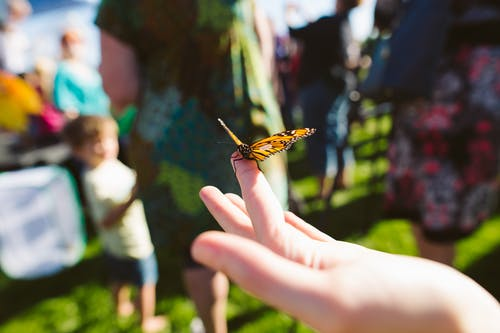Selective Focus Photography of a Butterfly Perching on Human Finger