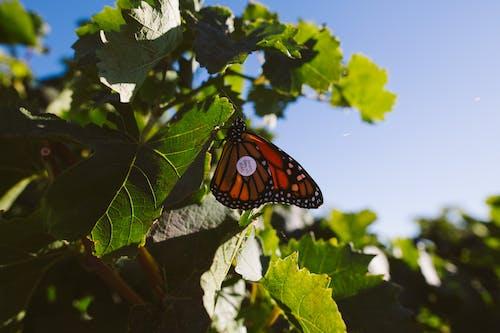 Kostnadsfri bild av dagsljus, delikat, fjäril, flora
