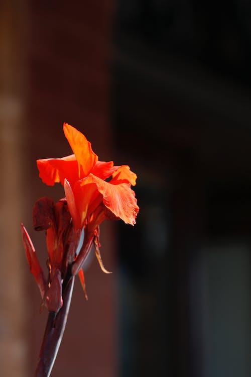 Immagine gratuita di fleur-de-lis, fleur-de-lys