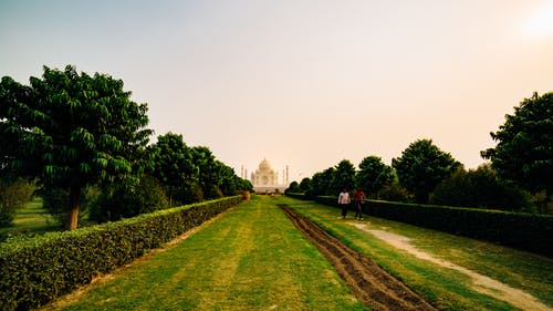 Taj Mahal and Green Grassy Walkway